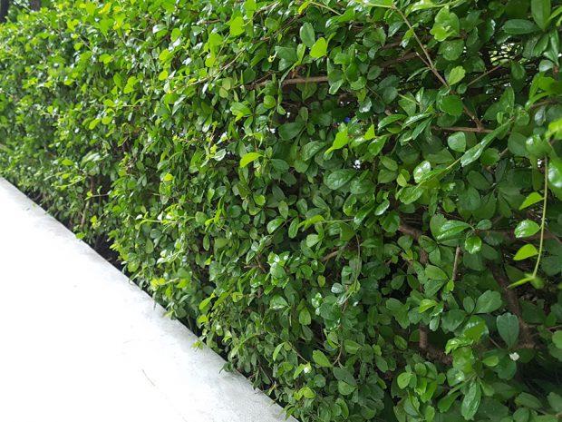 ปลูกต้นไม้ ติดกำแพง